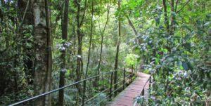 Trilha Suspensa do Parques Nacional da Serra dos Órgãos